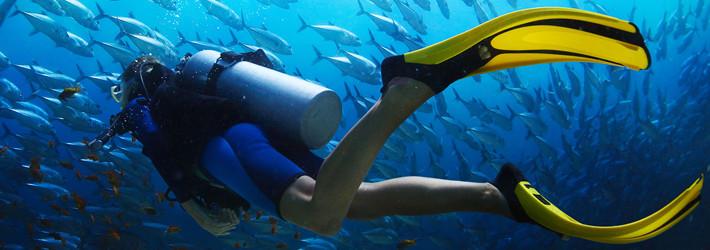 dykker finner