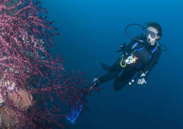 dykkerlygter